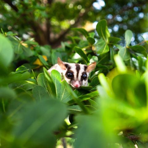 42++ Hewan endemik australia terbaru